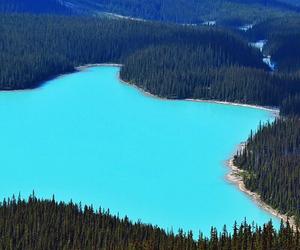 blue, beautiful, and nature image