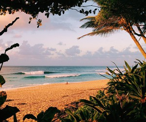 beach, hawaii, and native image