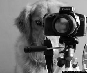 dog, photography, and camera image