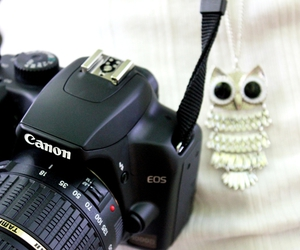 canon, owl, and white image