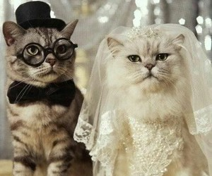cat, wedding, and funny image