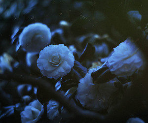 evening, flora, and flowers image