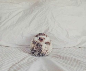 animal, cute, and adorable image