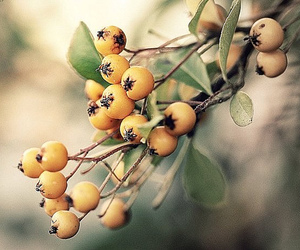 autumn, berries, and dewberry image