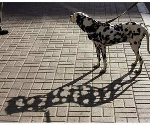 dog, dalmatian, and ombre image