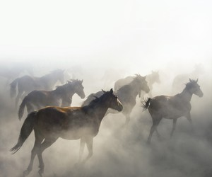 horses and fog image