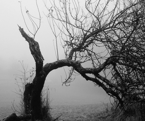 tree, black and white, and Darkness image
