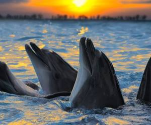 dolphin, nature, and sunset image