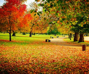 autumn, Hyde Park, and london image