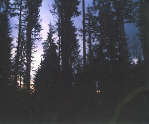 forest, night, and trees image