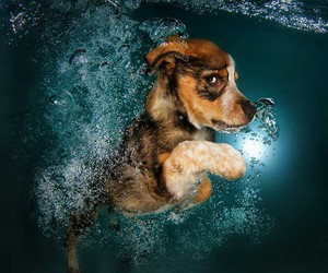 dog, water, and cute image