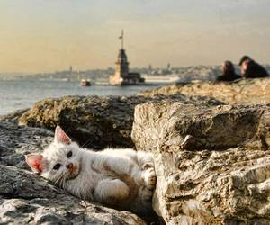 cat, istanbul, and kizkulesi image