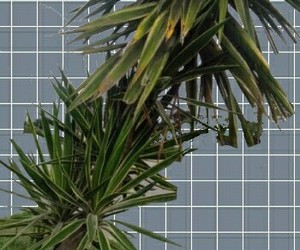 background, green, and plants image