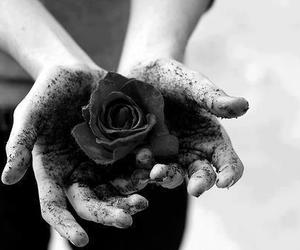 black, hands, and rose image