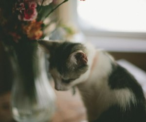 animals, vintage, and cats image