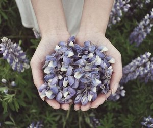 flowers, hands, and purple image
