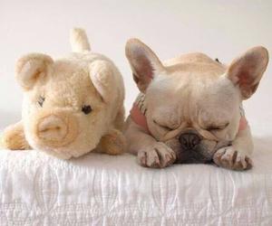 animal, bulldog, and pug image