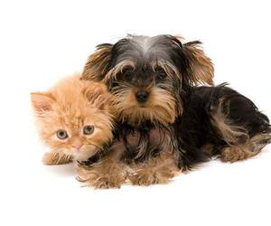 cats, dogs, and kitten image