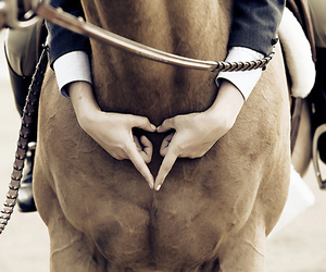 horse, love, and heart image