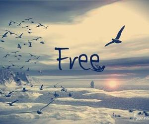 free, bird, and freedom image