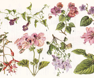 flowers, art, and plants image