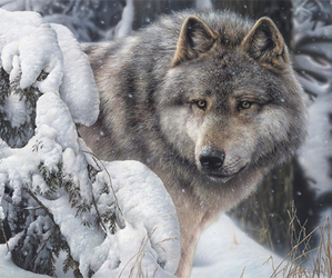 wolf and beautiful image