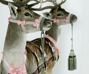 christmas, reindeer, and animal image