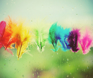 colors, feather, and plumas image
