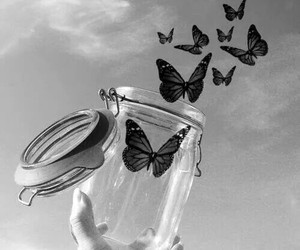 butterfly, black and white, and freedom image
