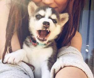 dog, girl, and husky image