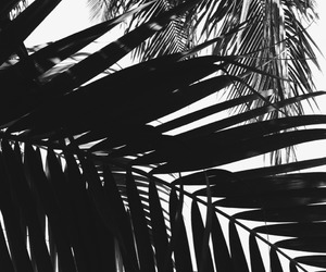 black and white, palm trees, and nature image