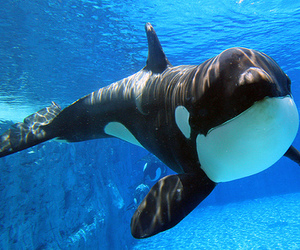 whale, animal, and cute image