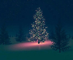 christmas, tree, and light image