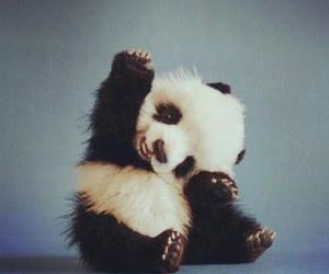 baby panda, creature, and panda image