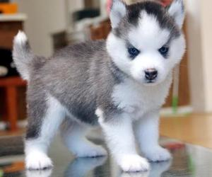 """puppy love cute and the """"mean"""" look image"""