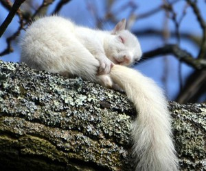 animal, squirrel, and white image