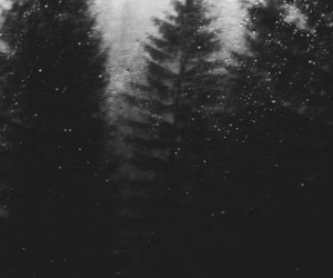 forest, rain, and black and white image