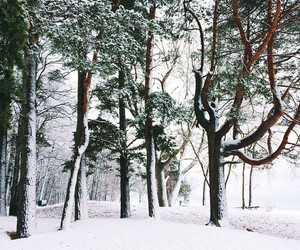 christmas, december, and forest image