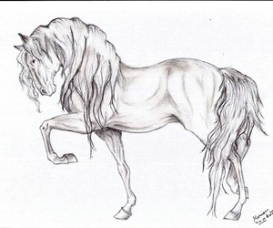 horse, drawing, and pretty image