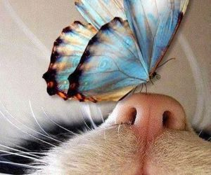 animals, cats, and insects image
