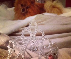 crown and dog image