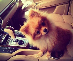 dog, cute, and car image