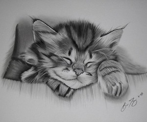 drawing, cute, and cat image