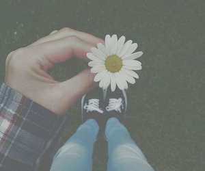 flowers, daisy, and vans image