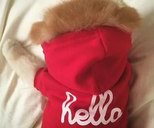 dog, hello, and boo image