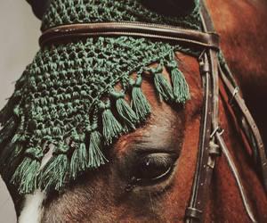 horse and fashion image