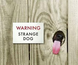 funny, warning, and fence image