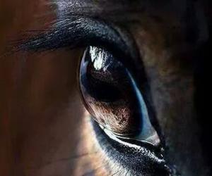 horse, eye, and eyes image