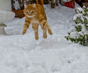 cat, i believe i can fly, and funny image