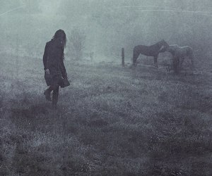 horse, alone, and black and white image